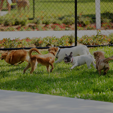 Large Dog Park at Reno Villas Apartments
